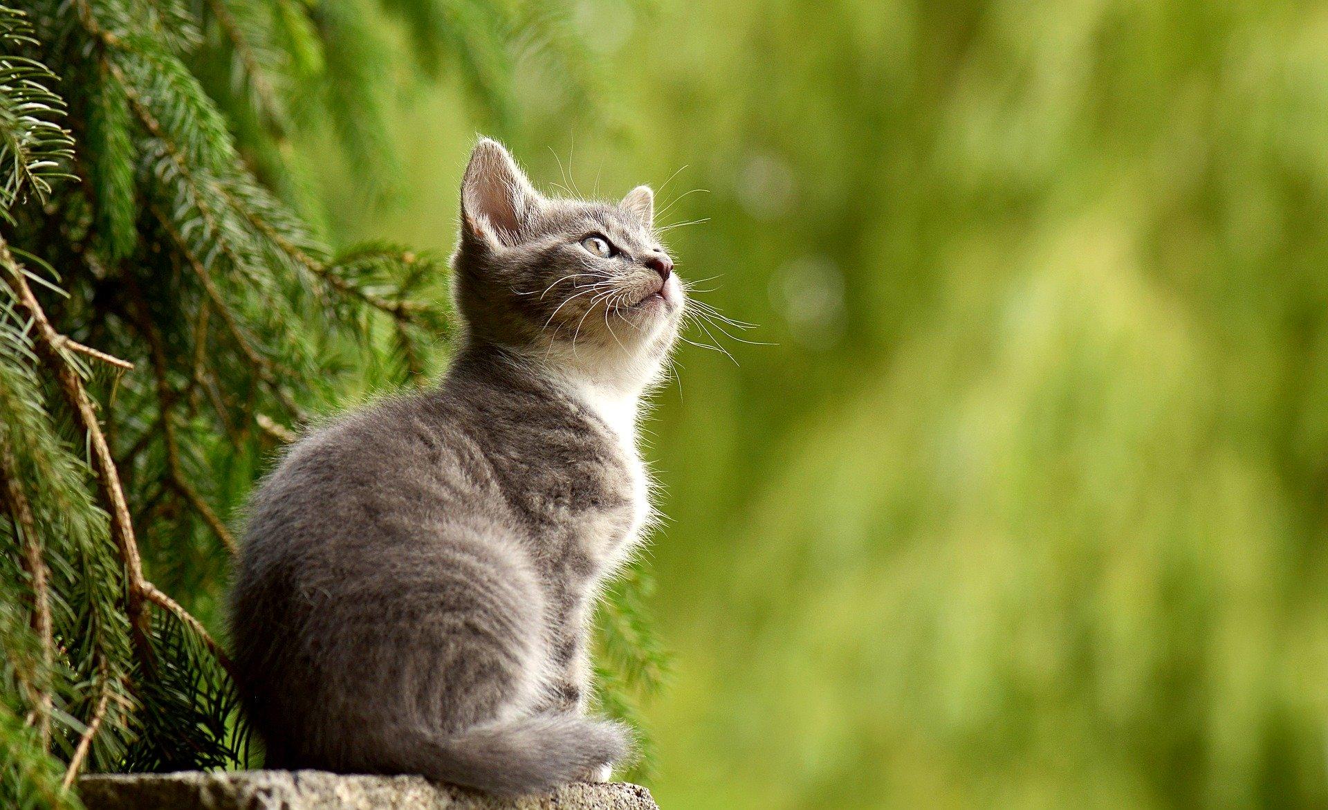 Cosas que quizás no sepas sobre los gatos